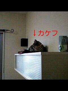 20081223120429.jpg