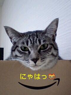 20090127124520.jpg