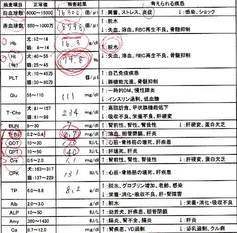 ネネ血液検査2009.2.4-3