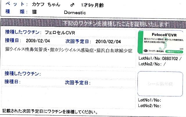 カケフワクチン2009.2.4-1