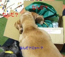 2009_0217_205253AA-1.jpg
