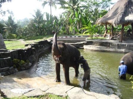 象さんの水浴び