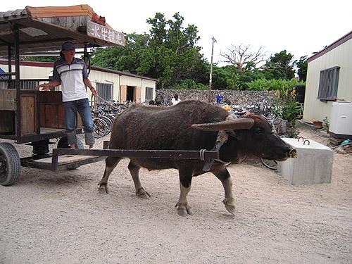 ☆竹富島の水牛車①