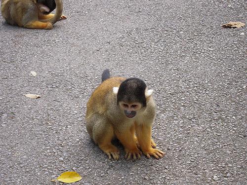 ☆やいま村のリス猿①