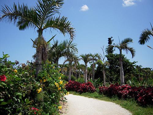 ☆由布島の植物園③