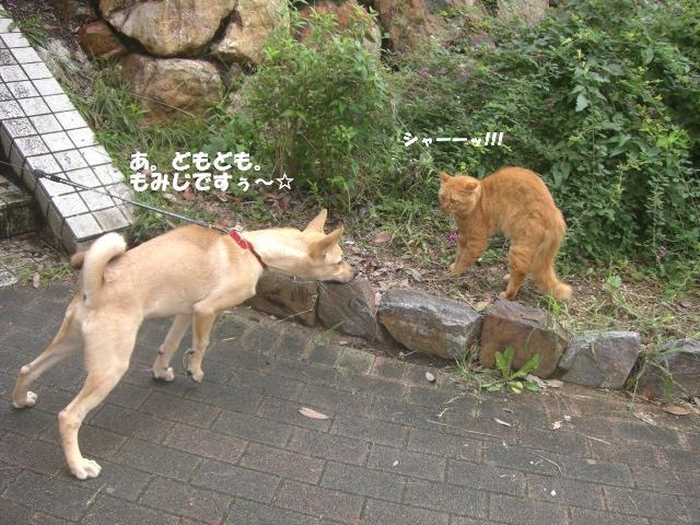 もみじと猫チャン