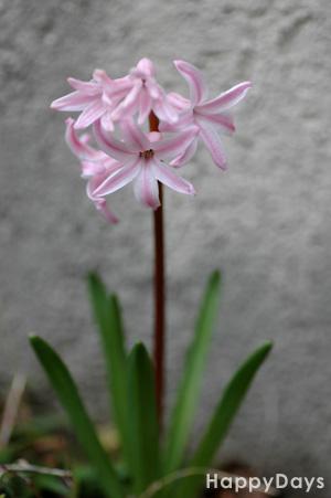 2010-03-18-1.jpg