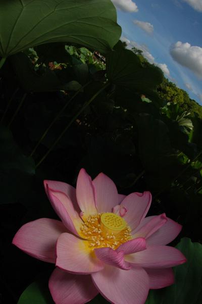 20100722-01.jpg