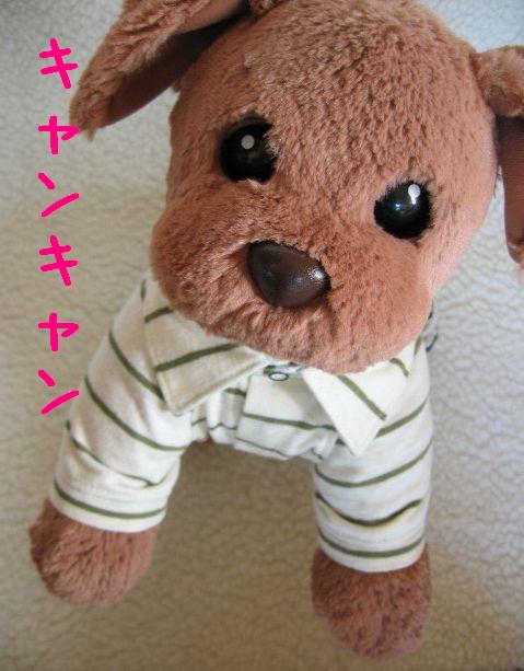 IMG_8577.jpg