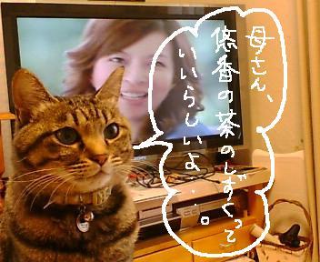 お知らせ 編集