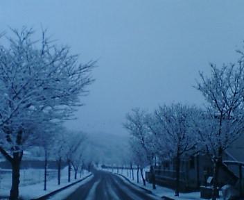 桜並木も雪景色