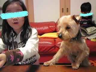 パセリを食べる犬 2 編集