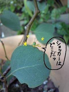 バッタのあかちゃん 1 編集