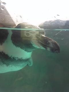ペンギン水族館 2