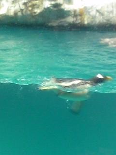 ペンギン水族館 3