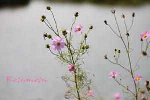 10-21-kosumosu