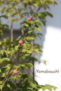 10-5-yamaboushi