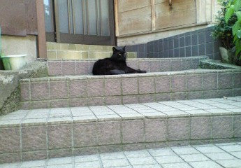 白山神社の黒猫