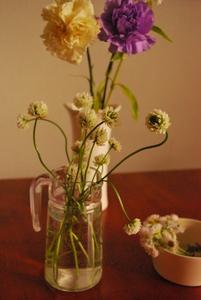 野の花たち。