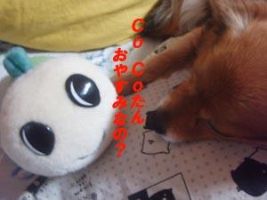 なみすけ&CoCo