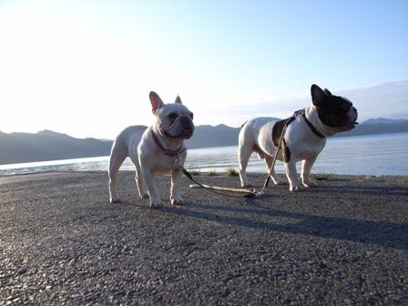 田沢湖犬2