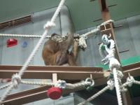 北海道~旭山動物園
