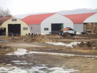 北海道~牧場の牛