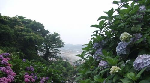 鎌倉 紫陽花めぐり~成就院