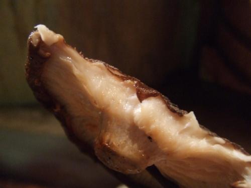 地魚炙り焼と和酒 おけやの鈴太郎 特製ダシで肉厚どんこしいたけ