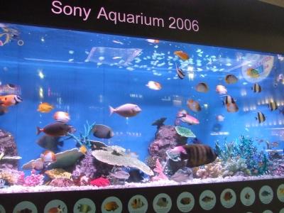 Sony Aquarium 2006