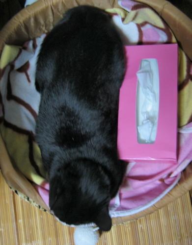 2009.5.30ルナ4