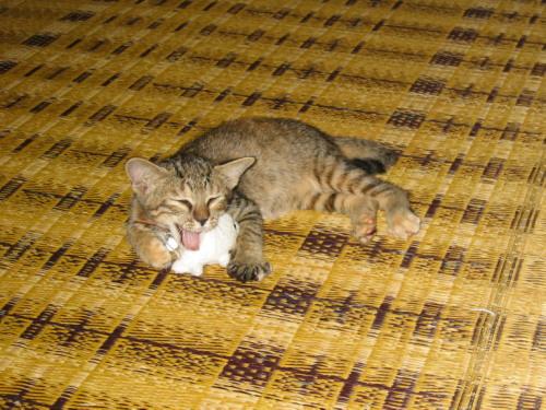 2009.8.26小梅1