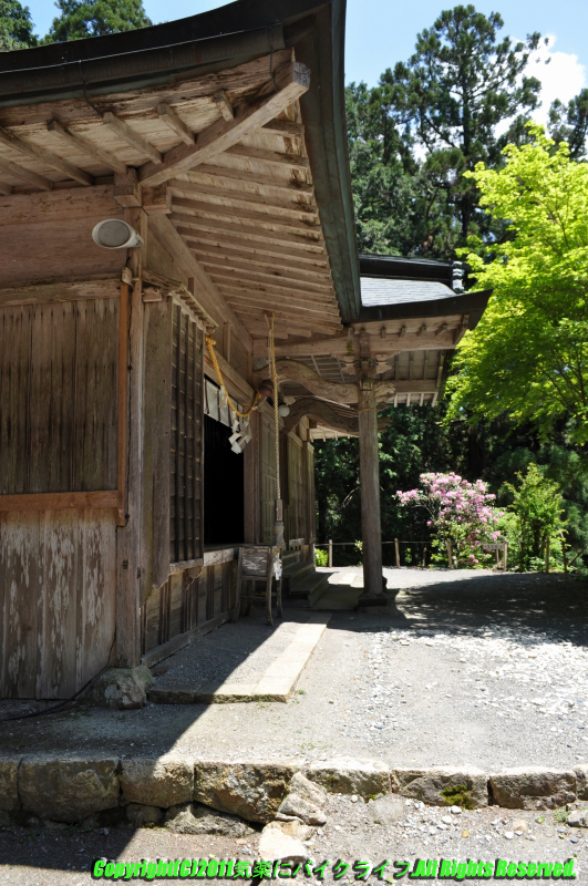 tamaki_shrine