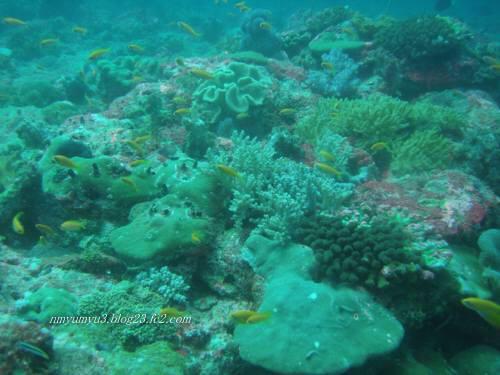 ピキピキの珊瑚