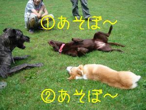 誘う犬たち