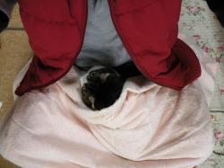 毛布の下に9123