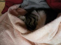 毛布の下に29123