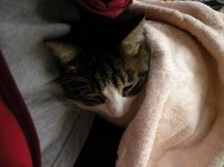毛布の下に39123