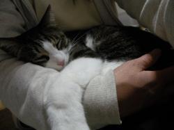 腕の中でねんね 2009.3.22