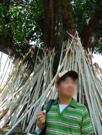 菩提樹の木の下には白い木が立てかけてある。これは何?