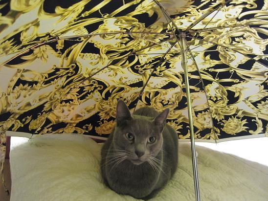 IMG_4139 かさと猫