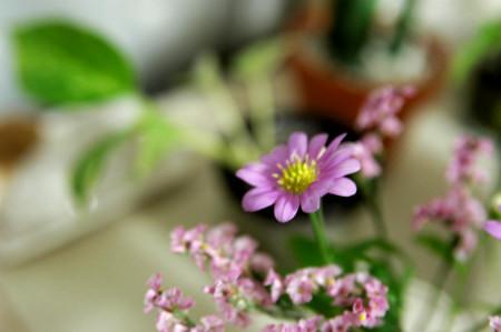 ピンクの花 別バージョン