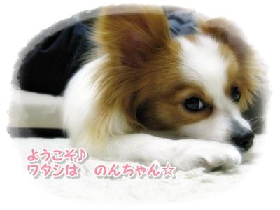 IMG_2344_20090521203530.jpg