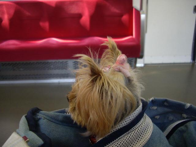 誰もいない電車の中でノンちゃん不思議顔・・・。