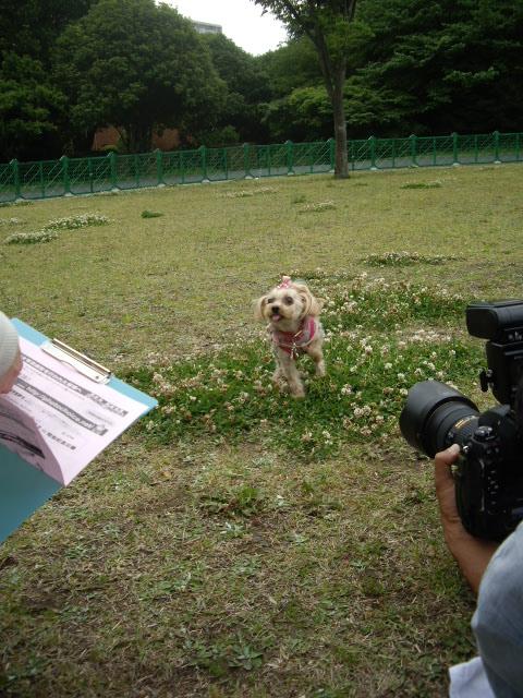 シロツメ草の上で撮影会