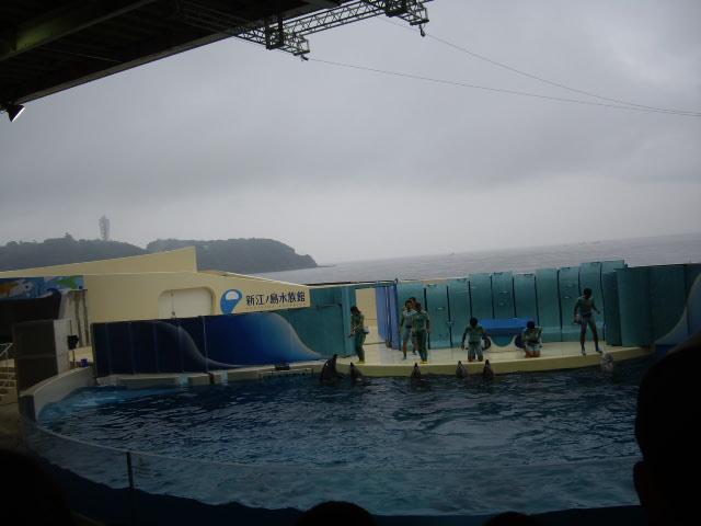 イルカのパフォーマンスご挨拶