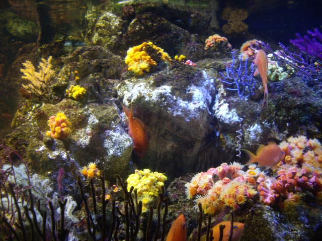 色鮮やかなサンゴ礁