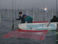 05101524手際よく海苔網を張っていく