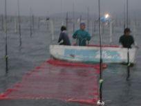 05101526海苔網張り作業は大変さ