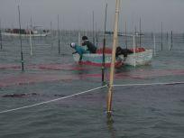 05101527海苔網張りも順調に